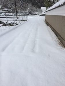 280125雪6