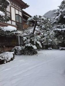 280125雪3