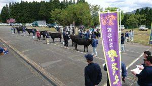 290425肉牛3